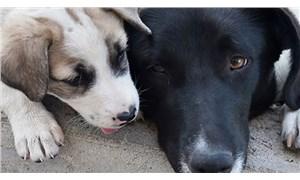 Hayvan öldürmekten değil 'mala  zarar vermekten' ceza