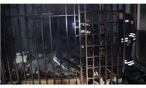 Petshopta çıkan yangında kuşlar yaşamını yitirdi