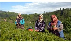 Suya anında renk veriyorsa çayda boya vardır: Sahte çaya karşı dikkatli olunmalı
