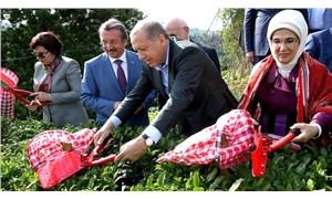 AKP ne kadar övünse az: Rize'nin en fazla ithal ettiği ürün çay oldu!