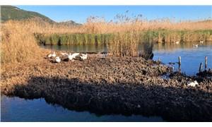 Akyaka'da koruma altındaki sazlıklar kesildi: Bölge rant baskısı altında