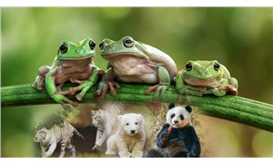 İklim krizi, canlı türlerinin üçte birini yok edebilir
