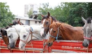 Ocak ayı hayvan hakları raporu: En az 48 bin hayvanın yaşam hakkı gasp edildi