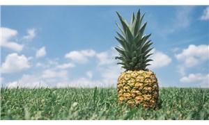 Şekeri bitiren AKP Sudan'da ananas yetiştirecek!
