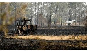 Avustralya'daki yangınlarda ormanların yüzde 21'i yok oldu