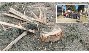 Gölmarmara'da ağaç kesimine tepki