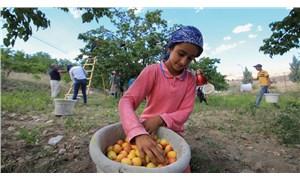 Ölen her 5 çocuk işçiden 3'ü tarımda çalışıyordu