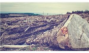 Odun üretiminde aşırı artış ormanlarımızı tehdit ediyor