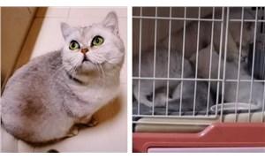 Kahraman kedi Lele: Ailesi karantinaya alındı, o hayatta kalmayı başardı