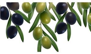 En kaliteli zeytinyağları ödüllendirildi
