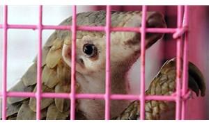 Gabon'da koronavirüs önlemi: Pangolin ile yarasanın tüketim ve satışları yasaklandı
