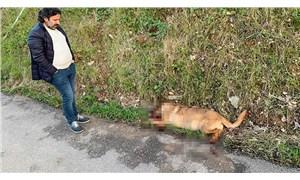 Bursa'da sokak köpeklerini tüfekle vuran saldırgan aranıyor