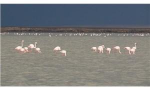 Koronavirüsü fırsat bilen kuşlar, Seyfe Gölü'ne akın etti