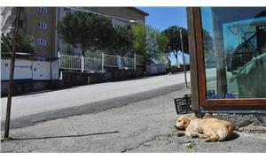 Sahibini taşıyan ambulansı takip eden köpek hastane önünden ayrılmıyor