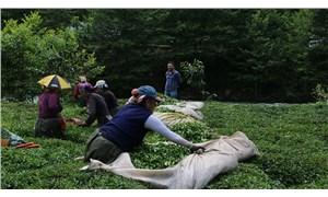 Çay üreticisi endişeli: Salgın döneminde üretim nasıl yapılacak?