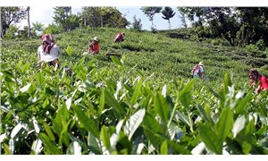 CHP'li Kaya: Çay için acilen koronavirüs önlemi alınsın
