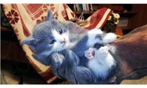 Bölme duvar arasına düşüp, mahsur kalan yavru kedi itfaiye ekiplerince kurtarıldı