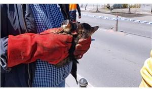 Yıkım durduruldu, yavru kediler son anda kurtarıldı