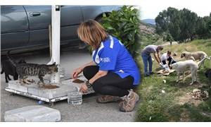 İzmir'de sokak hayvanları için seferberlik: 60 noktada mama dağıttılar