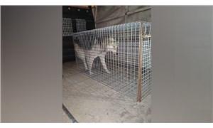 İşkence edilen köpek çöp konteynerinde ölüme terk edildi