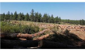 Milas'ta orman katliamı yaşanıyor
