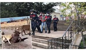 Yavru eşeği köpeklere öldürten Berat Kaya serbest bırakıldı, sosyal medya ağaya kalktı