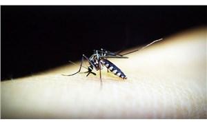 Bilim insanları, sıtmayı 'tamamen durduran' bir mikrop keşfetti
