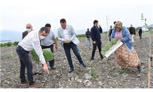 Menemen Belediyesi tıbbı bitkiler üretimine başladı