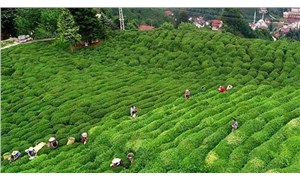 Çay üreticilerinin seyahat izin belgesiyle ilgili genelge