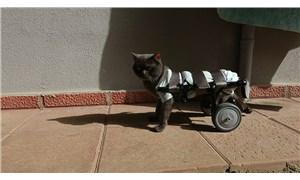 Engelli kedilerin yürüyebilmesi için yürüteçler yapıyor