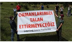 Trabzon'da salgın fırsatçılığına tepki: Ormanlarımızı talan ettirmeyeceğiz!