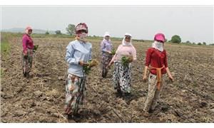 Çiftçi küskün, tarım bitme noktasında