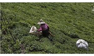 Çay üreticisi şirketlerin insafına bırakıldı