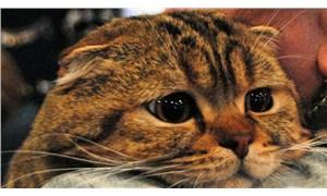 Rusya'da bir kedide koronavirüs tespit edildi