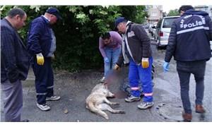 Sokak köpeğini tabanca ile öldürdüler