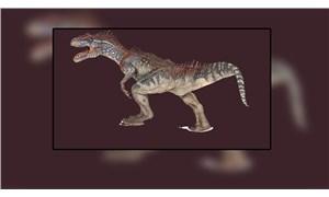 'Oportünist' Allosaurus'lar da zorda kalınca yamyamlık yapmış