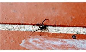 Süper kahraman olmak için kendilerini örümceğe ısırtıp hastanelik oldular