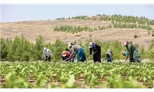 Çiftçiler 2020'yi yıllarca unutmayacak