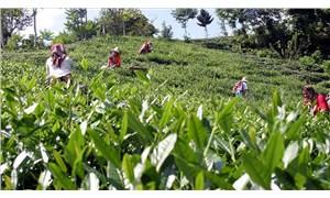Rize'de testi pozitif çıkan çay üreticisi sayısı 22'e yükseldi