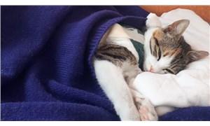 Yürüyemeyen sokak kedisi 'Şanslı' sağlığına kavuştu