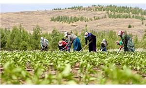 Borcun var dediler çiftçinin desteğine  el koydular: Elektrikte özelleştirme çiftçiyi aç bıraktı