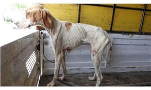 Kırklareli'nde 12 köpek ormanlık alanda ölü bulundu
