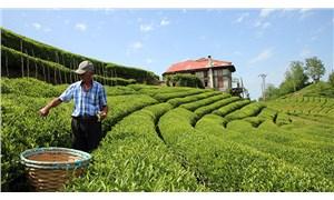 Devrilen TIR'daki çay Sri Lanka çayıymış