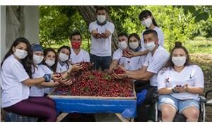 Gönüllü meyve hasadı sona erdi