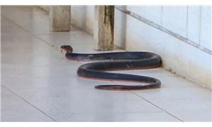 """""""Zehirli yılanlar gece çıkıyor, sahillerde ayakkabıyla dolaşın"""""""