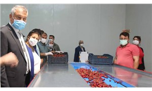Adana Büyükşehir Belediyesi'nden üreticiye destek