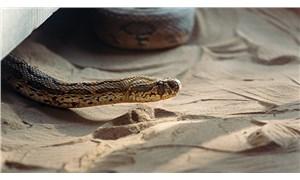 Yılanları öldürmenin ağır bedeli