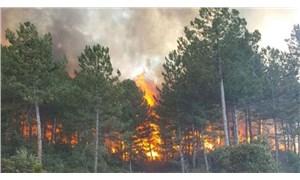 CHP'li vekil suç duyurusunda bulundu: Ormanı maden için yaktılar!