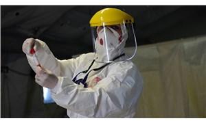 BM uyardı: Hayvanlardan insanlara bulaşan hastalıklarda artış bekliyoruz