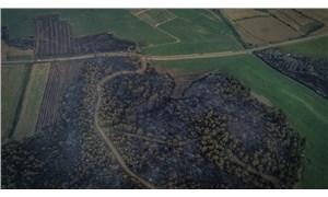Gelibolu'da orman yangını: 450 hektar alan yandı